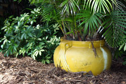Photo of a potted plant in CSI Natural Matting Mulch.